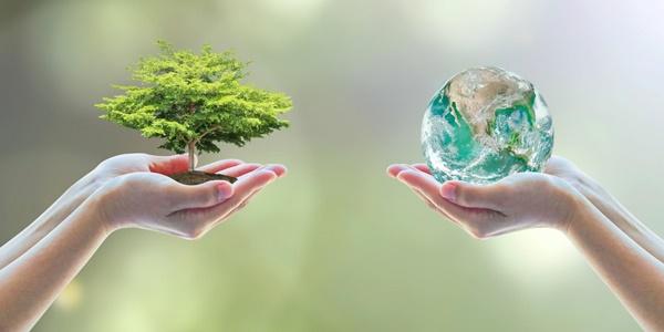 environment-tree-world